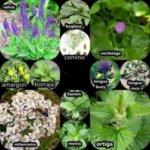 ¿PODEMOS CULTIVAR PLANTAS MEDICINALES EN NUESTRO PROPIO JARDÍN?