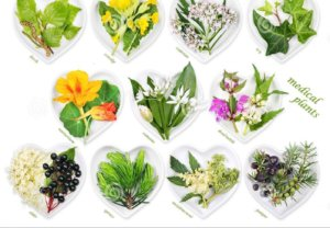 plantas y hierbas